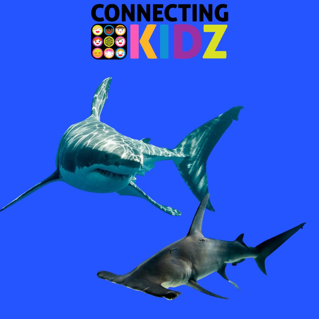 Faccia a Faccia con gli squali - nuotiamo con squali martello e balena